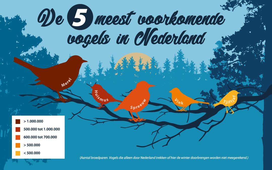 Vogelpopulatie Nederland